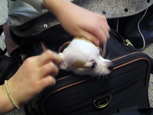 Travel Talk: Save Money on Holiday Travel & Pet Support