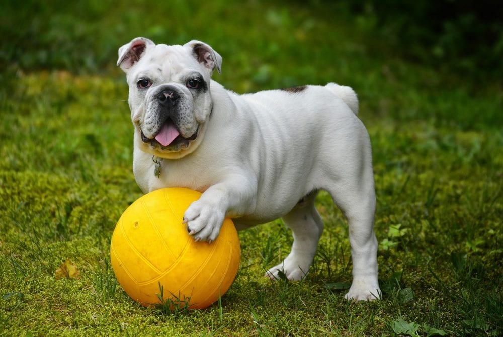 Tips From Top Dog Trainers