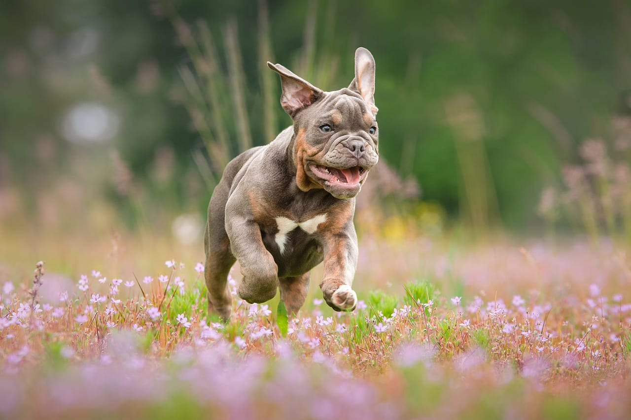 Tips to Get Rid of Bad Doggy Breath